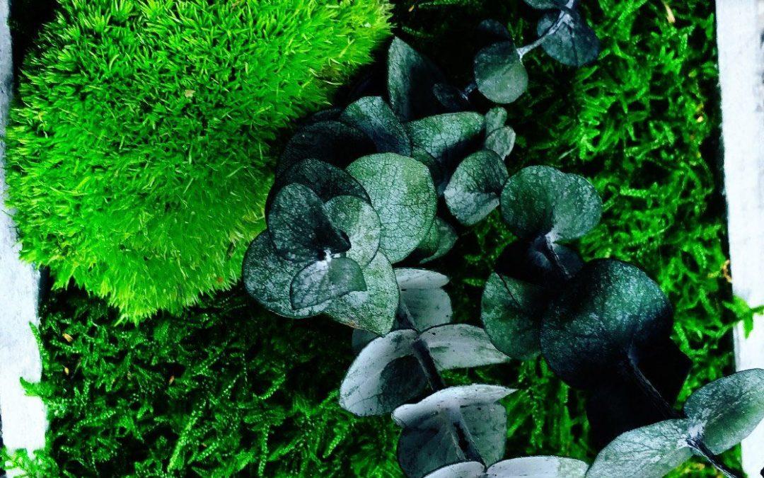 Tendance : les murs végétalisés